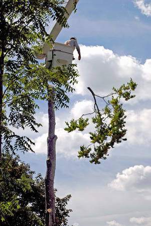 tree removal service: Pruning limbs for tree removal Stock Photo