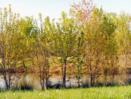 春は、川岸に来る。 写真素材