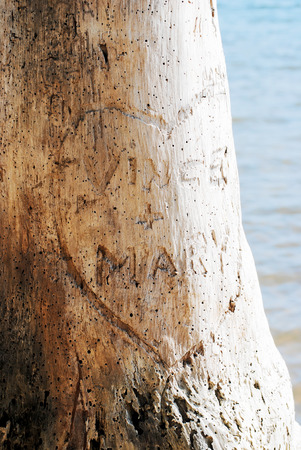 Heart carved in tree with lovers' names.