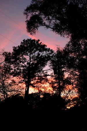 purple sunset: Pink and purple sunset silhouette