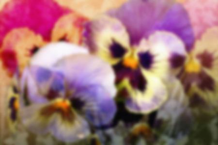 Viola tricolor pansy or heartsease.    Orton effect.