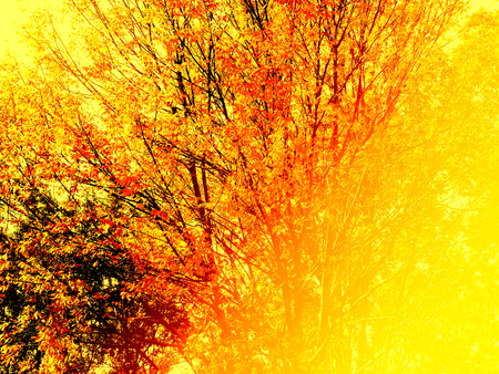 woodsy: Autumn tree foliage with color filter effect Stock Photo