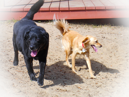 playmates: Two dogs running side by side Stock Photo