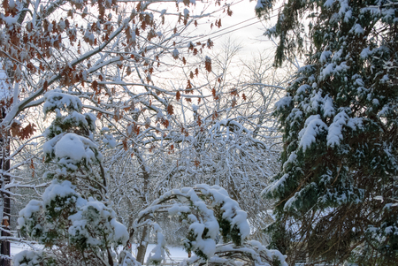 frigid: Pale sunset after snowstorm