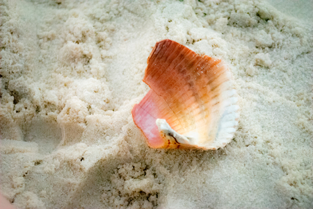 fragment: Pink seashell fragment Stock Photo