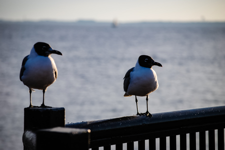 guard rail: Seagulls  perched on a guard rail. Stock Photo