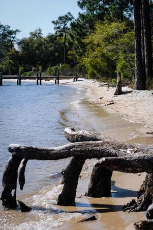 bayou: tree roots at the edge of the bayou