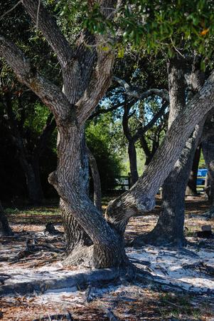 to shade: Shade under the trees Stock Photo