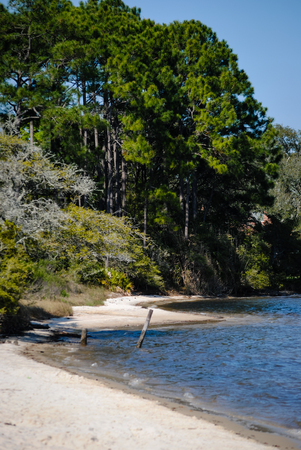 restful: Shore of the bayou
