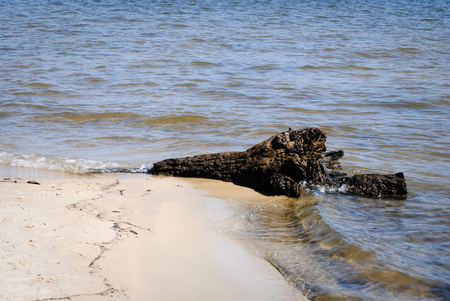 bayou: driftwood on the shores of the peaceful bayou