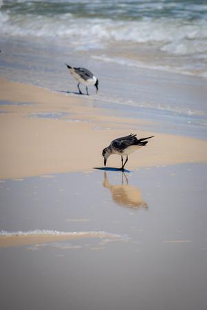 on shore: Seagulls on the shore Stock Photo