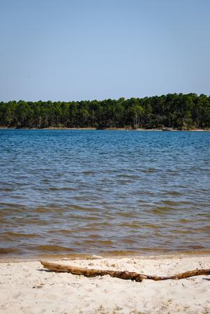 bayou: Driftwood on the shore of the peaceful bayou Stock Photo