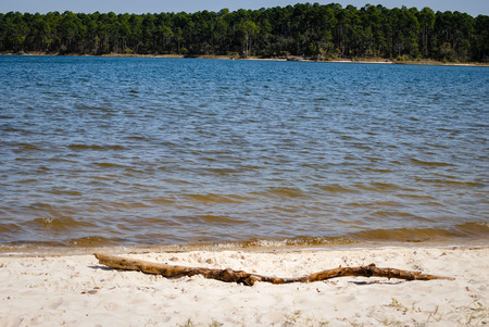 restful: Driftwood on the shore of the peaceful bayou Stock Photo