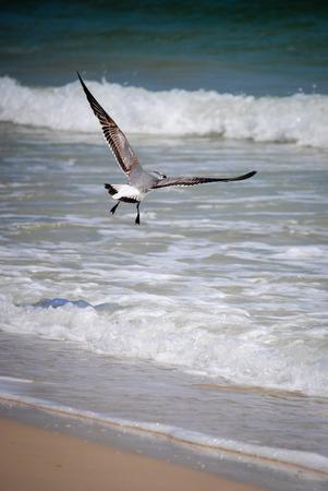 bird feet: Seagull takes flight