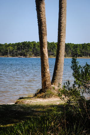 bayou: Trees at the edge of the bayou