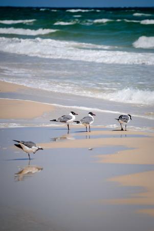 shore: Gulls on the shore Stock Photo