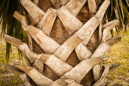 Palm tree trunk Stok Fotoğraf