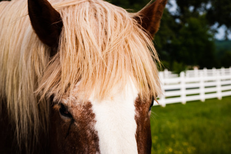 mane: Closeup of horses eyes, ears, and mane