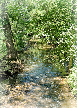 dappled: Dappled sunlight on the forest stream. Stock Photo