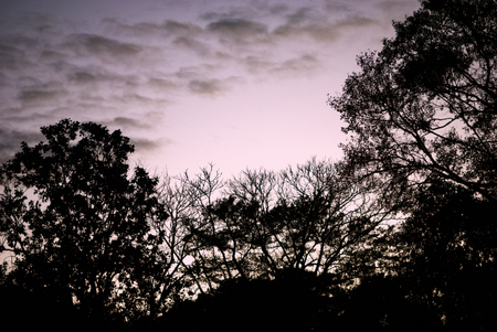 Treetops silhouette against evening sky with clouds.