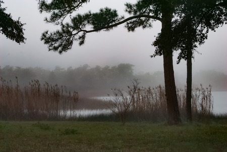 Morning fog clings to the bayou waters.