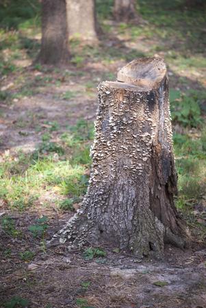 Fungus colony on stump Imagens