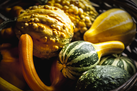 Assortment of decorative gourds