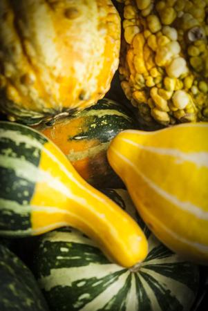 Assortment of decorative gourds