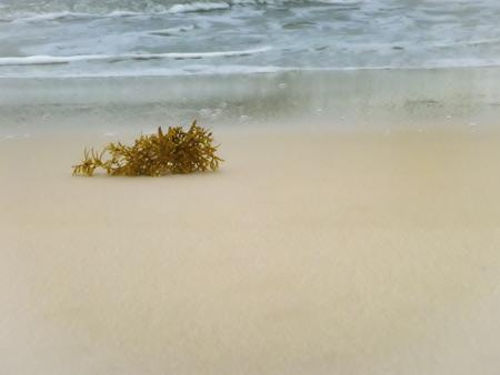 Waves wash seaweed onto the beach Stock Photo
