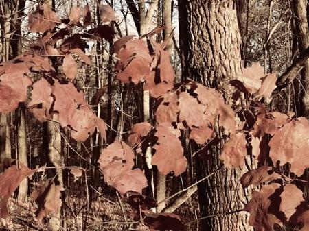 Autumn woods; split tone effect Stock Photo