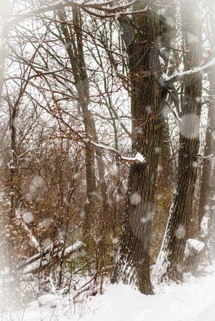 Woods in winter snow