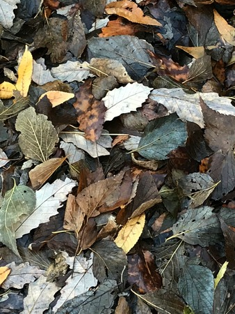 Fallen autumn leaves. Stock Photo