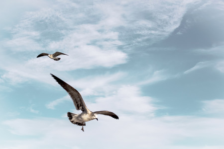 Seagulls flying in a partly cloudy sky.