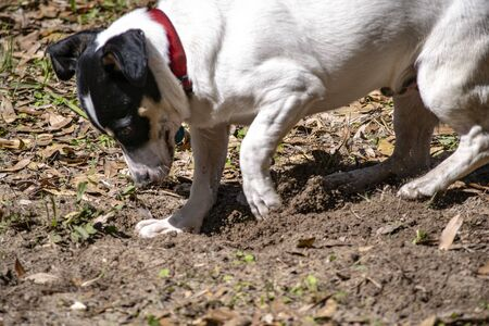 Puppy digging a hole in sandy ground.