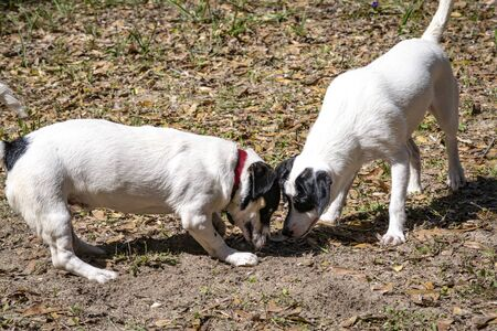 Two puppies diggin a hole in sandy ground. Stock Photo