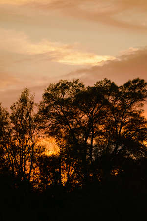 Peaceful end of the day with golden clouds as the sun sets. Stock Photo