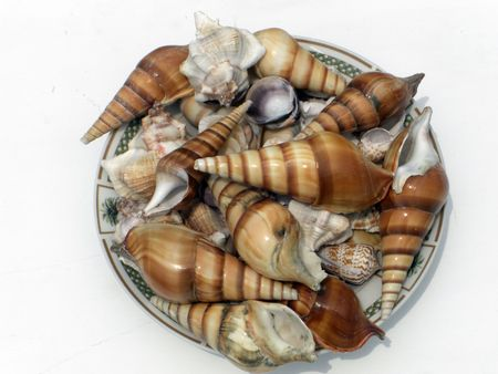 A bowl is filled with a  variety of seashells.