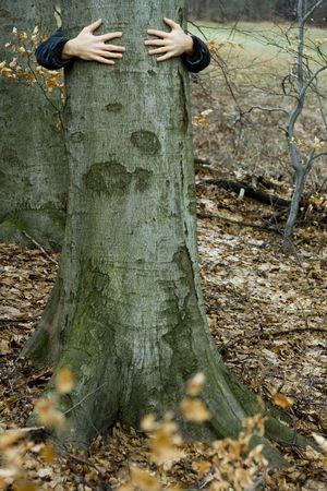 mani su albero