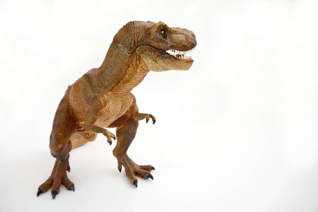 Brown tyrannosaurus rex (t-rex, coelurosaurian theropod dinosaur) didactic figure showing head with open mouth showing sharp teeth, three quarter profile, placed on the right on a white background.