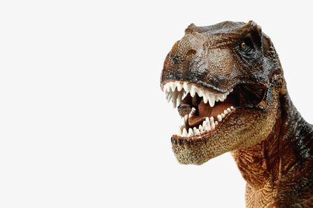 Tyrannosaurus rex marrón (t-rex, dinosaurio terópodo celurosaurio) figura didáctica con la boca abierta mostrando dientes afilados, tres cuartas partes del cuerpo y brazos cortos, colocados a la izquierda sobre un fondo blanco. Foto de archivo