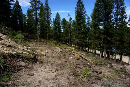 Pile of fallen evergreen spruce pine trees after clearing of forest land for new mountain residential construction in Colorado.