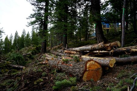 Forest land in Colorado cleared of pine trees for new mountain residential construction, showing freshly cut logs on the ground and house in the background.