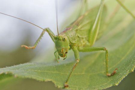 frondage: grasshopper Stock Photo
