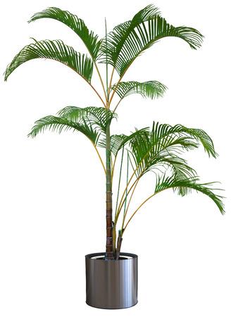palm plants  white background