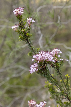 Wild Flowers Banque d'images - 120359239