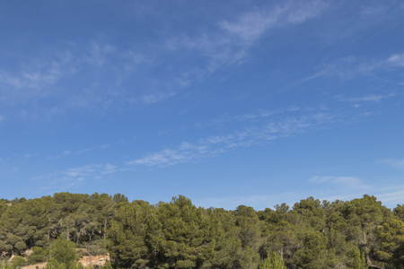 Pine forest with the sky and clouds in the background Banque d'images - 120359244