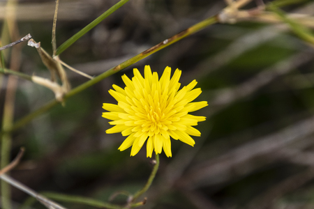 Yellow daisy flower Banque d'images - 120359247