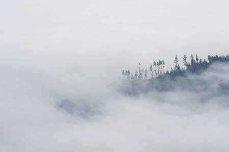 Cloud Covered Ridge at Altitude, Olympic National Park, Washington Redactioneel