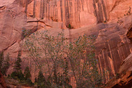 The Finger Canyons of the Kolob, Zion National Park, Utah