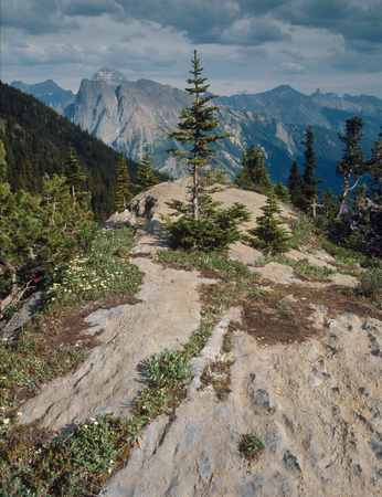 The Hamilton Lake Trail, Yoho National Park, British Columbia